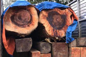 Vận chuyển gỗ trái phép bị phát hiện