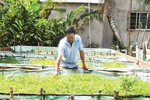 Diện tích nuôi trồng thủy sản tăng 11,54%