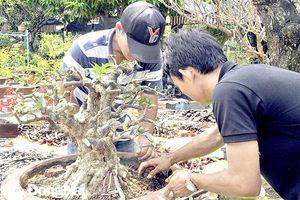 Độc đáo nghề trồng và tạo dáng bonsai