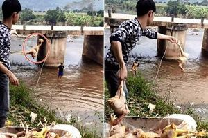 Chàng trai quăng hàng chục con gà xuống suối khiến dân mạng nhao lên tiếc rẻ, hóa ra đó lại là 'hậu trường' làm cỗ cưới khó tin