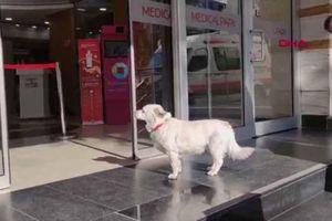 Chó chờ chủ bên ngoài bệnh viện suốt nhiều ngày