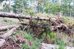 Lâm Đồng dừng dự án sân golf để bảo vệ đất rừng