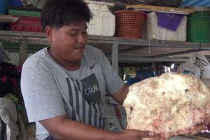 Khối long diên hương quý hiếm giá hàng tỷ đồng hóa ra là chất thải của con vật khổng lồ