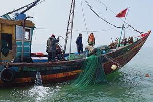 Bắt giữ 5 tàu đánh cá sử dụng giã cào khai thác hải sản trái phép