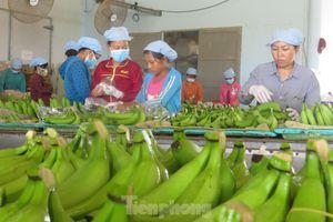 Việt Nam tăng đầu tư mạnh vào Ấn Độ