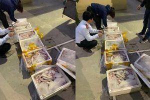 Hãi hùng 250 kg cá khoai ướp foocmon đang ra nhà hàng, quán nhậu