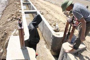 Ruộng đồng 'khát nước' bên kênh thủy lợi hàng trăm tỉ đồng