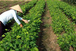 Xây dựng Thái Bình tiếp tục là điểm sáng về xây dựng nông thôn mới