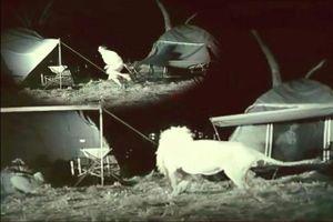 Kinh hãi trước cảnh sư tử tấn công người cắm trại đêm