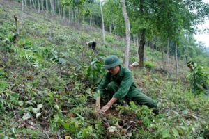 LDG thâu tóm doanh nghiệp dự án phát triển rừng, ước lãi hơn 970 tỷ đồng