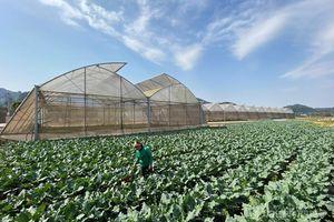 Sức sống nông thôn mới vùng biên cương Cao Lộc