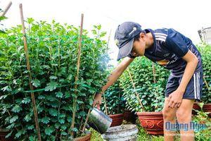 Nhà vườn tất bật chuẩn bị vụ hoa Tết