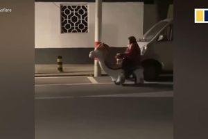 Lái xe đồ chơi từ cửa hàng về nhà, cụ bà 76 tuổi bị CSGT xử phạt