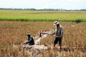 Theo dõi xâm nhập mặn, chỉ đạo sản xuất nông nghiệp tại Đồng bằng sông Cửu Long