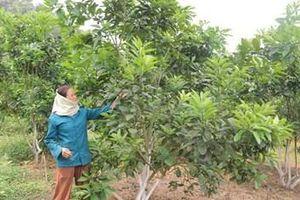 Đồng hành cùng nông dân phát triển sản xuất, nâng cao đời sống