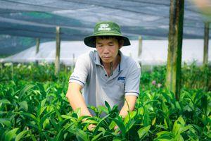 Vườn lan 12.000 m2 ở TP.HCM thất thu dịp Tết