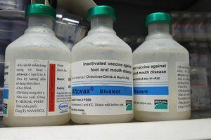 Công ty sản xuất vaccine tả lợn châu Phi, giá cổ phiếu tăng 50%/tuần