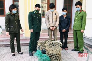 Lực lượng liên ngành Hà Tĩnh bắt vụ vận chuyển 6 cá thể chồn, don trên địa bàn biên giới