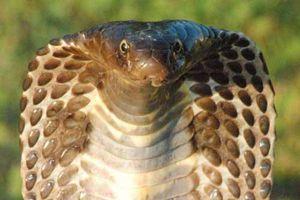 Phát hiện mới về sự tiến hóa của loài rắn: 'Cơ chế nam châm' giúp chúng kháng lại nọc độc kẻ thù