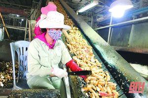 Công ty TNHH Chế biến nông - lâm sản xuất khẩu Như Xuân: Đổi mới dây chuyền công nghệ, nâng cao hiệu quả sản xuất