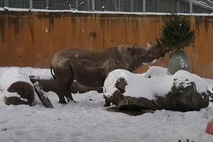Động vật ở vườn thú Estonia bỡ ngỡ khi chơi đùa với tuyết
