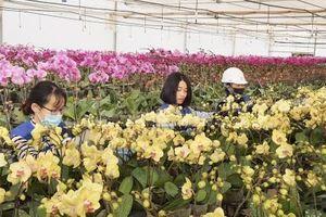Hoa Tết khoe sắc bên Nhà máy xử lý môi trường