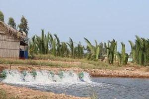 Các vùng, cơ sở không chủ động được nguồn nước không nên thả nuôi tôm nước lợ