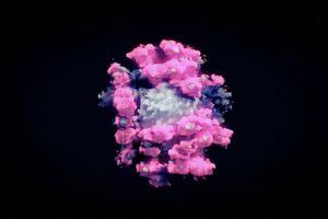 Hình ảnh 3D đầu tiên của virus corona