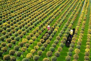 Vẻ đẹp làng hoa Sa Đéc ngày cận Tết