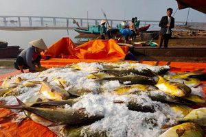 Hà Tĩnh: Ngư dân thu hơn nửa tỷ sau 1 đêm ra khơi