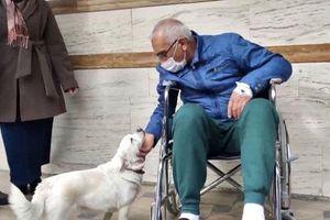 Cảm động cô chó ngoan ngoãn túc trực gần 7 ngày trước bệnh viện đợi chủ