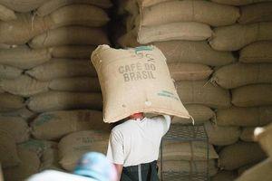 Giá cà phê hôm nay 25/1: Áp lực bán phòng hộ hàng vụ mới; Giá hồ tiêu tăng tại một số địa phương