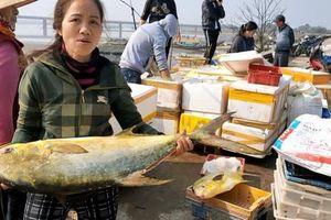 Trúng đậm mẻ cá chim vàng, một đêm ngư dân thu về hơn nửa tỷ đồng
