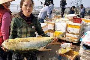 Hà Tĩnh: Ngư dân trúng đậm 'lộc biển' cá chim vây vàng