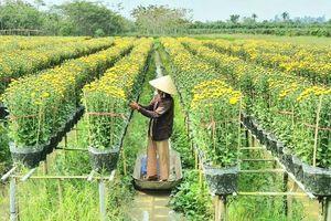 Làng hoa Sa Đéc: Hàng triệu giỏ hoa chuẩn bị ra chợ Tết