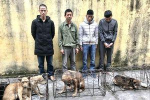 Bốn đối tượng trong 2 ngày thực hiện 17 vụ trộm chó