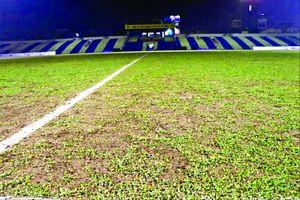 Báo động chất lượng sân bóng V-League