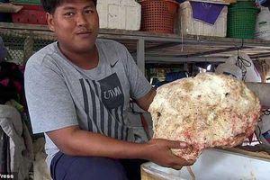Ngư dân vô tình nhặt được khối long diên hương 7 kg, trị giá lớn