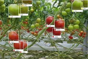Nhật Bản chế tạo robot sử dụng AI để thu hoạch trái cây