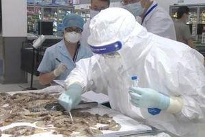 Trung Quốc tạm đình chỉ công ty xuất khẩu tôm lớn thứ 4 Ecuador