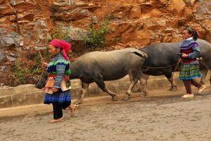 Chợ phiên Cán Cấu - địa điểm Việt kiều 'không thể bỏ qua' khi về thăm quê hương