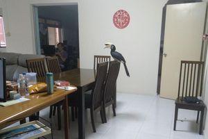 Đàn chim cực kỳ quý hiếm bất ngờ ghé thăm và món quà 'hết hồn' dành cho gia chủ