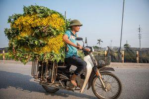 Dân Tây Tựu thu hoạch hoa cúc phục vụ rằm tháng Chạp