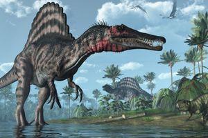 Phát hiện mới về khủng long Spinosaurus
