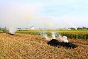 Hà Nội: Tỷ lệ đốt rơm rạ sau thu hoạch đã giảm