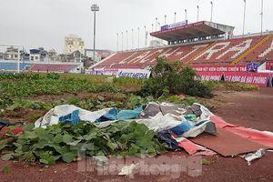 Hải Phòng dọn sạch khu trồng rau trong sân vận động Lạch Tray