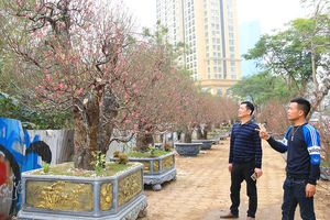 Nhiều loại hoa, cây cảnh giá 'khủng' khoe sắc trên đường phố Hà Nội