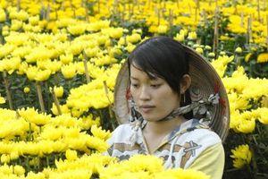 Phong vị tết Việt: Rực rỡ làng hoa, kiểng phục vụ Tết ở ĐBSCL