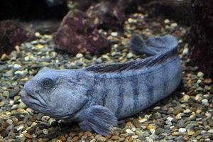 Những sinh vật 'đặc dị' nhất dưới đáy đại dương