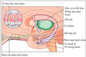 Vì sao SARS-CoV-2 làm con người mất khứu giác, vị giác?